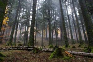 FORESTECASENT2