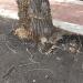 01-albero-asfaltato-03