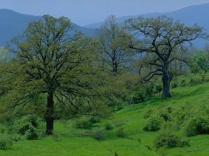 Ancora troppa confusione sulla riorganizzazione del sistema delle aree protette in Emilia Romagna