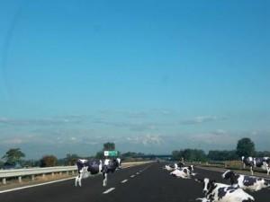 Grave errore di Errani equiparare passante nord di Bologna e servizio ferroviario metropolitano