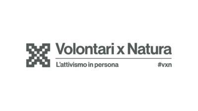 Logo VXN