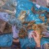 plastica Porto Garibaldi_Lorenzo Zelaschi